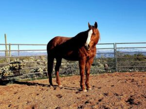 Megan's mare Annie. She also has an incredible healing story that is featured in the Healing Barn Movement!
