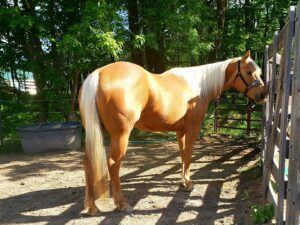 Megan's mare, Joey, She got her when she was 3 and she had a laundry list of health issues: laminitis, white line disease, tick diseases & coinfections. She's sound, barefoot and thriving. Her testimonials are featured in the Healing Barn Movement and Barefoot Horse Magazine.